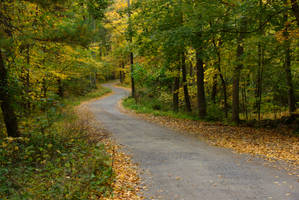 Road and Foliage by dseomn