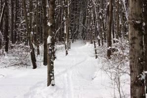 Snowy Trail 2 by dseomn