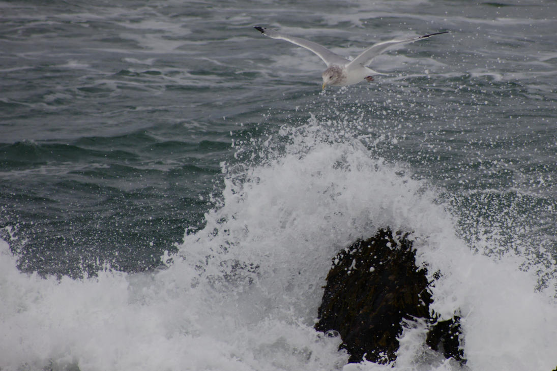 Seagull Over Spray by dseomn