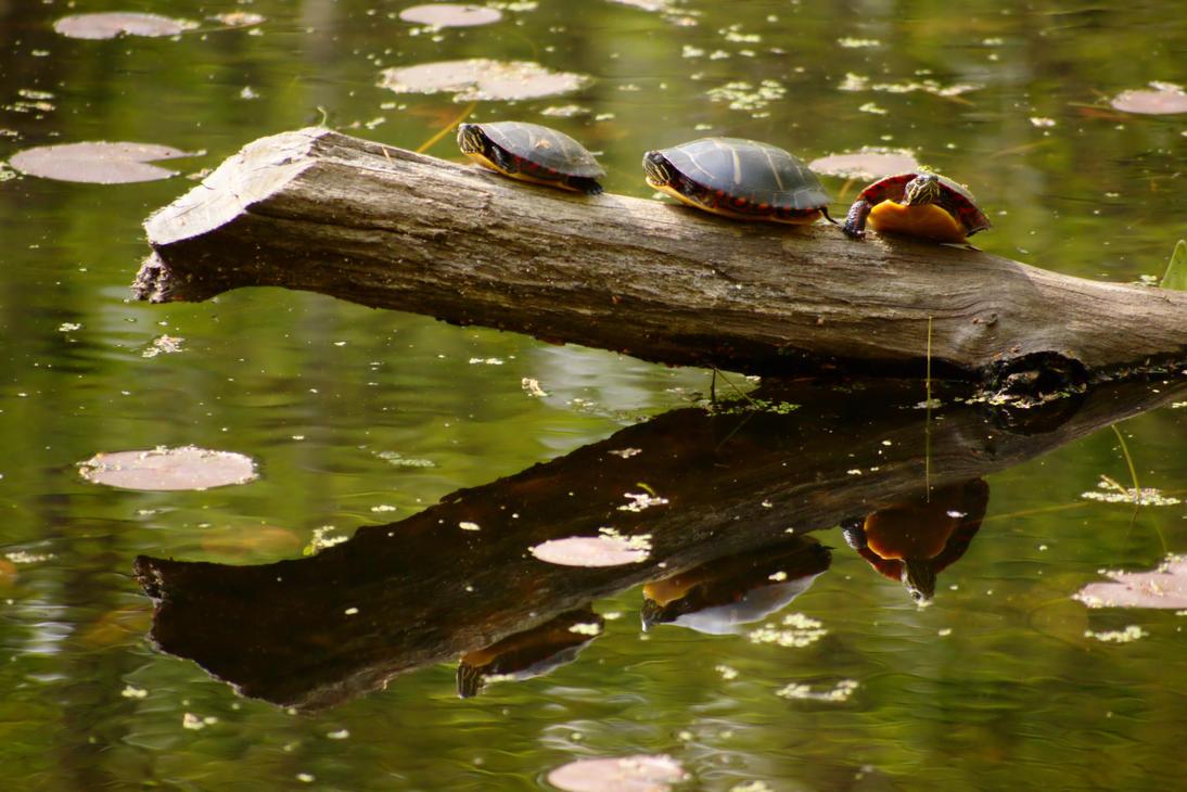 Turtles on a Log by dseomn