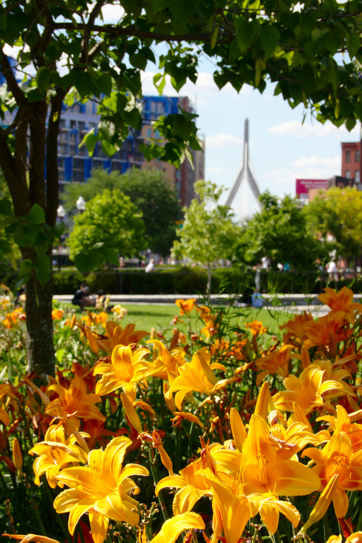 Flowers, Zakim Bridge, and a Tree by dseomn