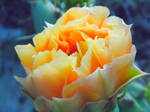 Delicate Yellow Cactus Flower