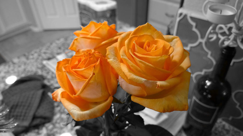 Roses by TheGerm84