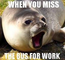 A Seal meme (again)