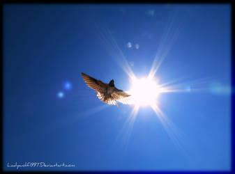 Swallow Shine by Ladywolf1997