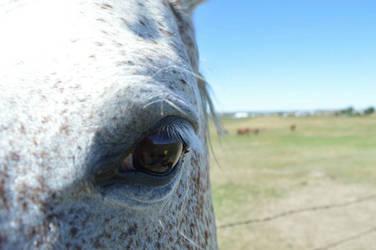 Horse's Eye by amandasickandtwisted