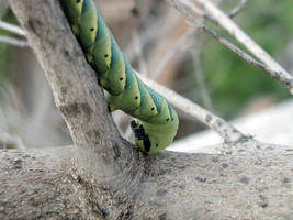 Giant caterpillar 1 by Cruciamentum