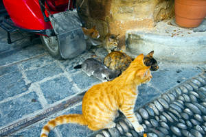 Kitty Community by Cruciamentum
