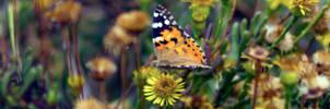 Fluttering amongst the flowers by Cruciamentum