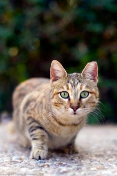 TAU kitty