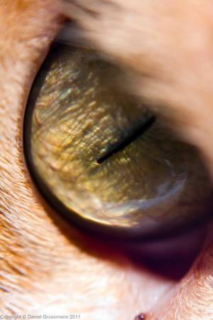 Eye of the Tigeress