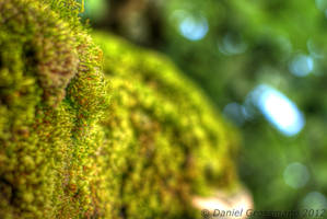 Moss by Cruciamentum