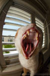 Mighty Yawn