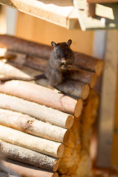 Tiny Rodent pt. 2