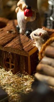 Tiny Rodent pt. 3