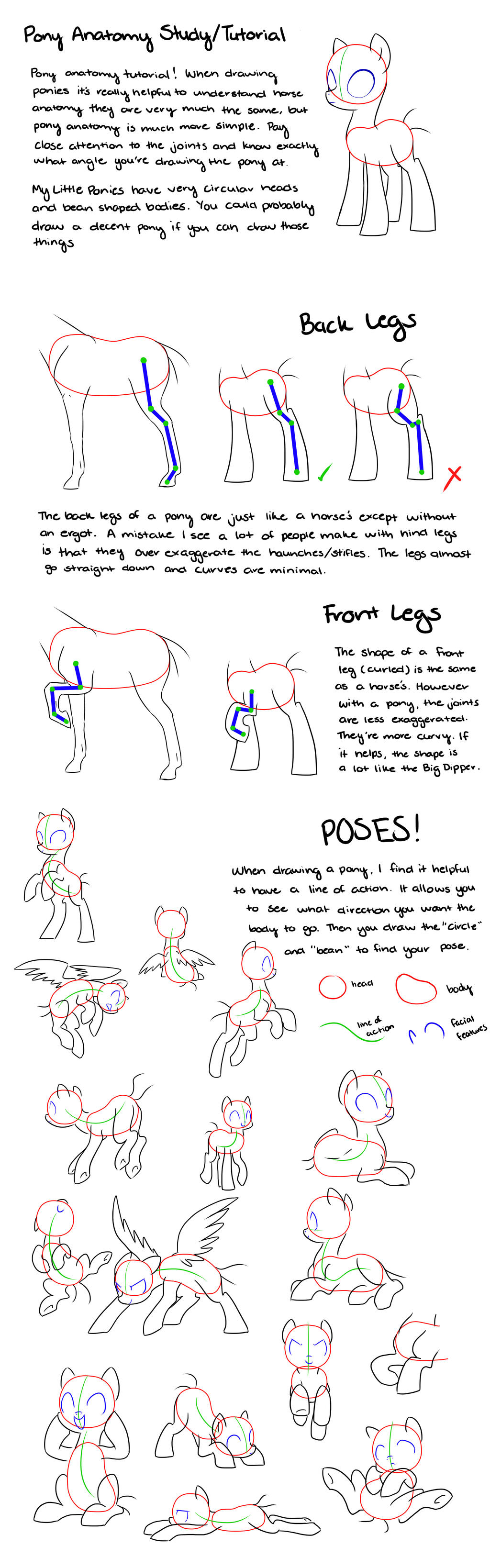 Pony Anatomy Tips/Study/Tutorial by kianamai on DeviantArt