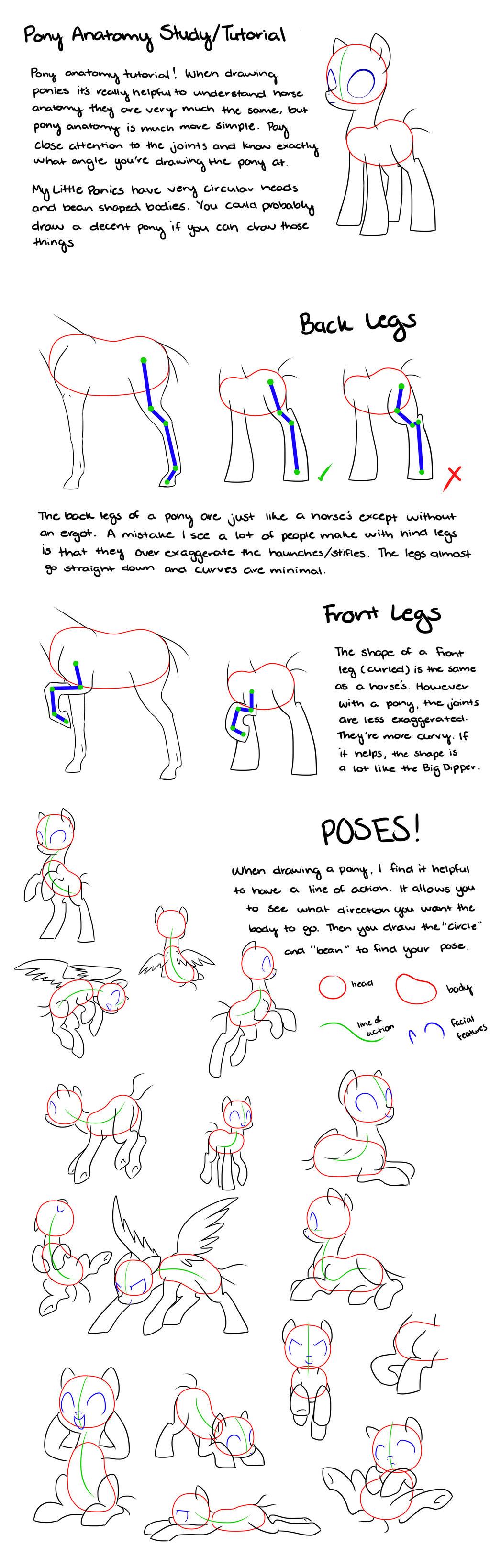 Study tips for anatomy