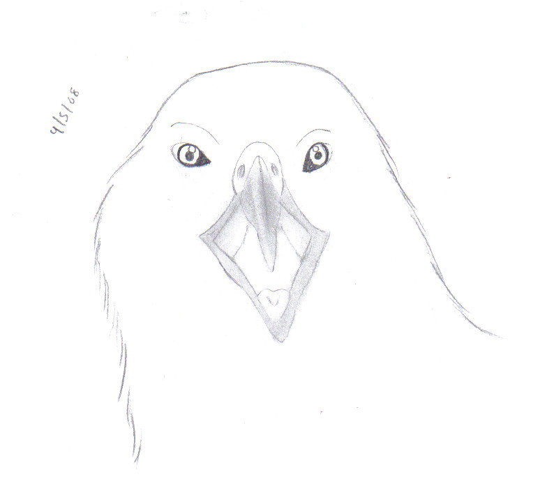 how to draw open mouth eagle by Frostbitejo7 on DeviantArt