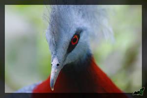 Blue Bird by Wild-Soul