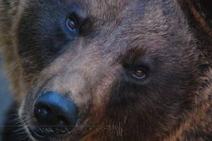 Not A Teddy Bear by Wild-Soul