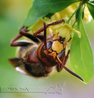 Buzzin' Hornet