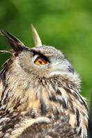 Eagle Owl by Wild-Soul
