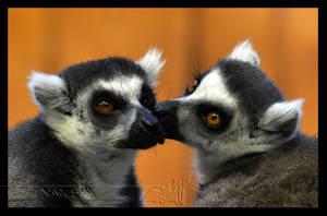 Lemur Love by Wild-Soul