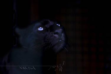 Darkness by Wild-Soul
