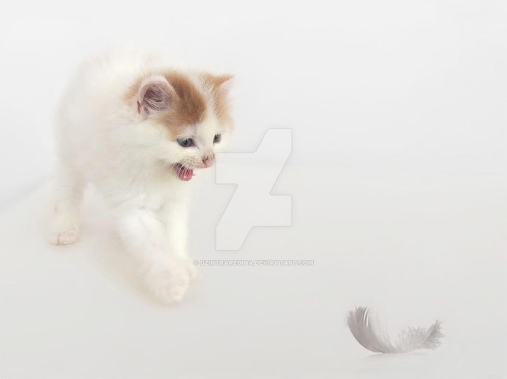 Nature Cat Scared Youtube Philip Knutson