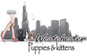 westchesterpuppies's Profile Picture
