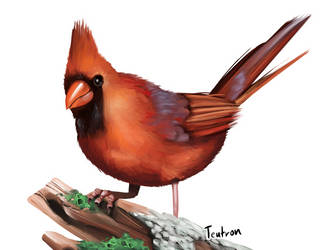 Cardinal from Reference by Teutron