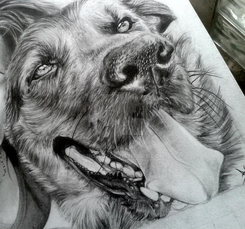 Dog by noli7o