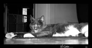 El Gato by AlexanderLeon