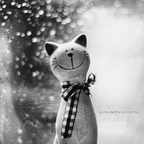 Cat loves rain by bebefromtheblock