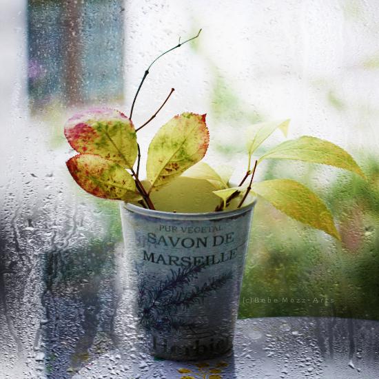 October Rain by bebefromtheblock