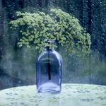 A walk in the summer rain