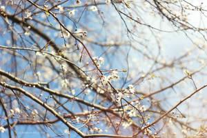 Oo.. spring it on. by bebefromtheblock