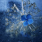 blue. by bebefromtheblock