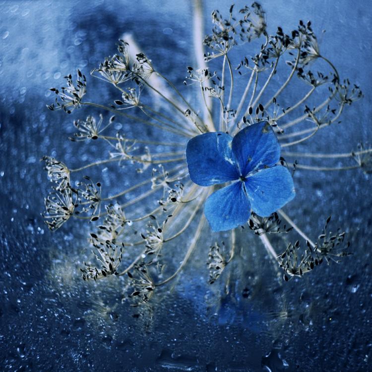 blue. by popoks
