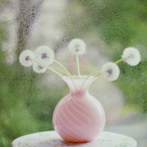 will you be my dandelion__