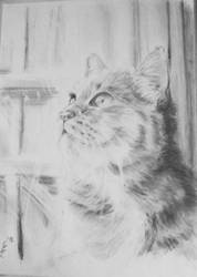 Cat by BodomBastard93