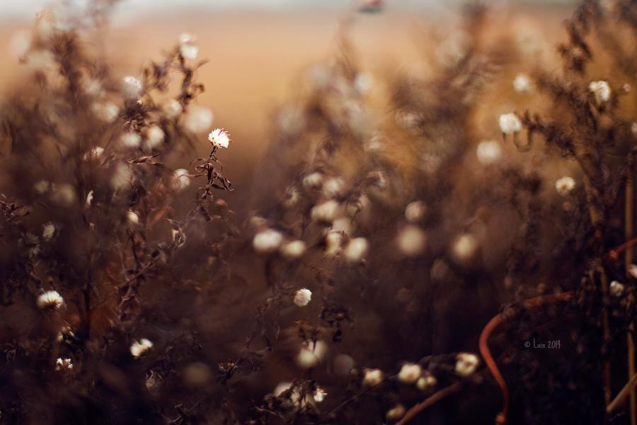 Winterpuschel by Lain-AwakeAtNight