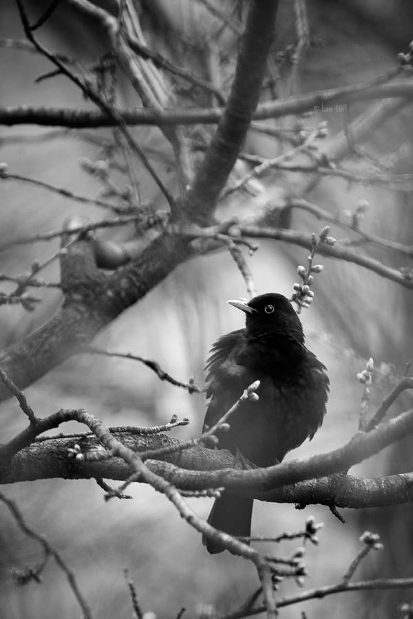 spring in black by Lain-AwakeAtNight