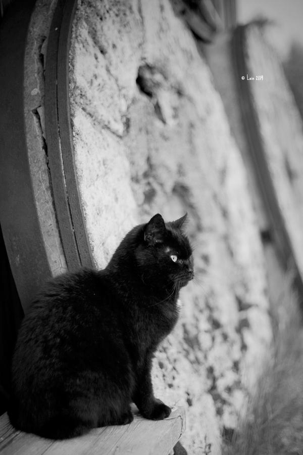Black Cat by Lain-AwakeAtNight