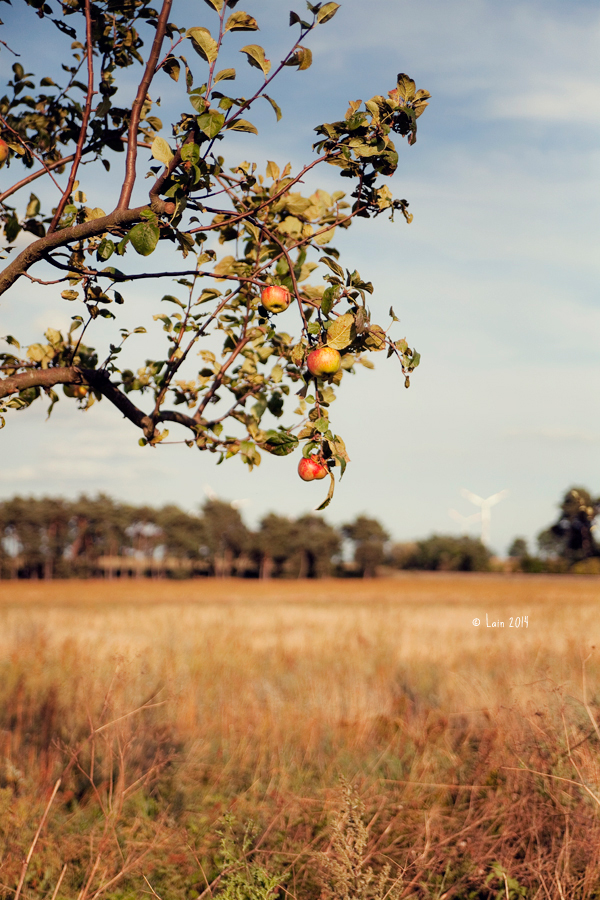 Appletree by Lain-AwakeAtNight