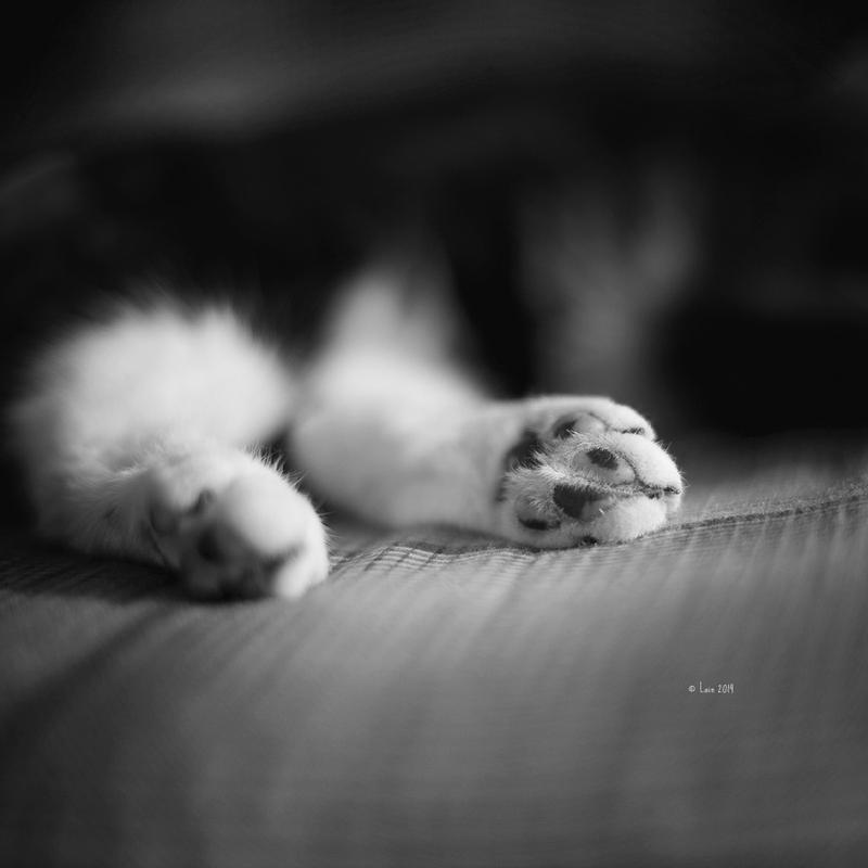 minky paws by Lain-AwakeAtNight