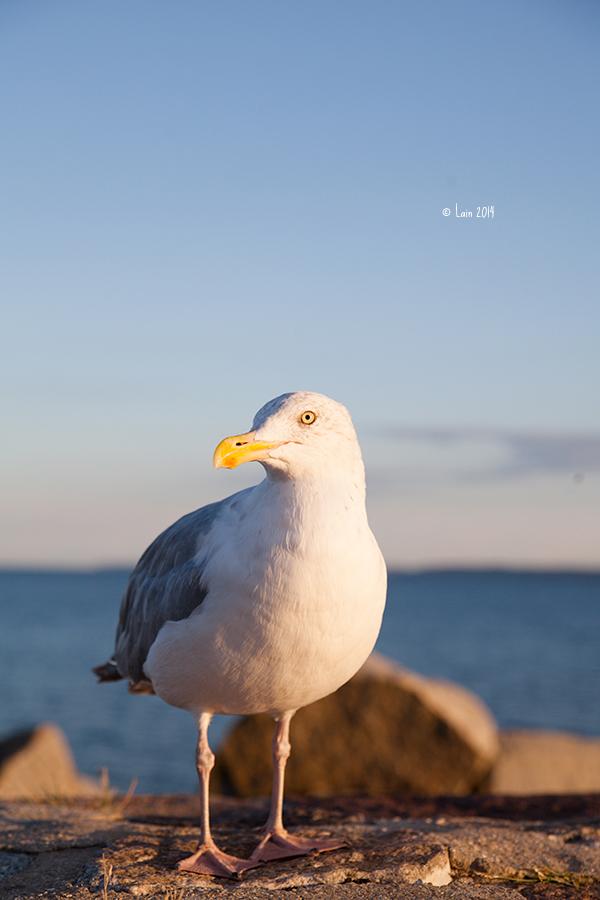 seagull by Lain-AwakeAtNight