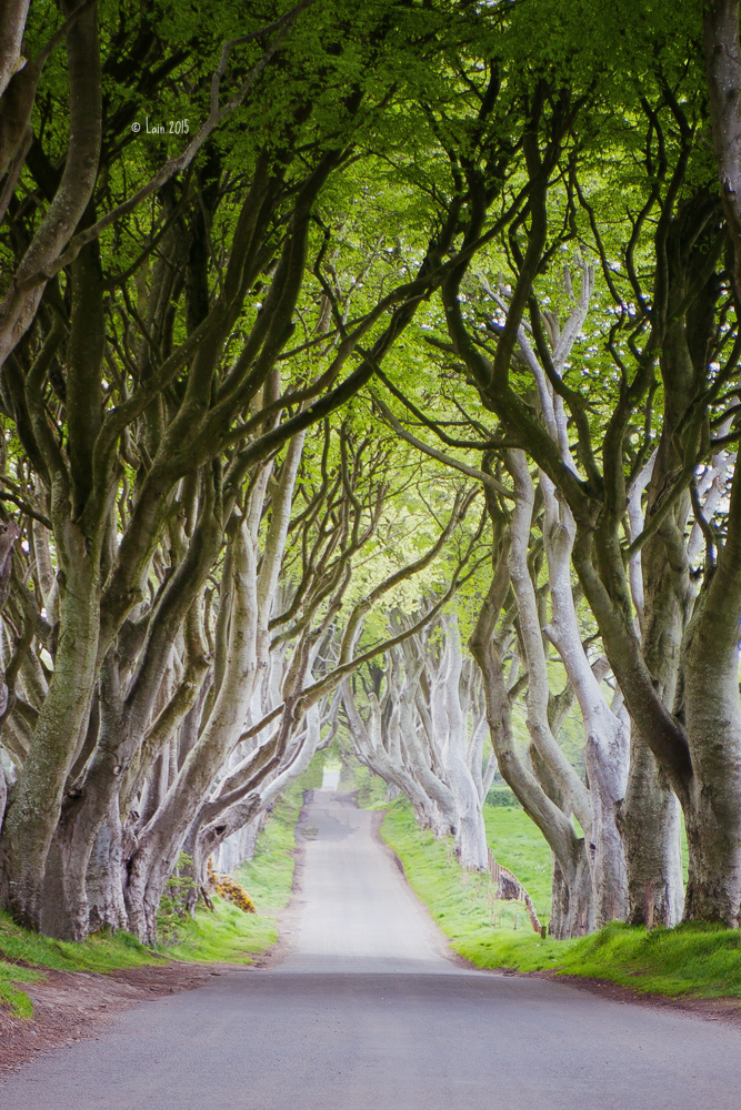 Dark Hedges by Lain-AwakeAtNight