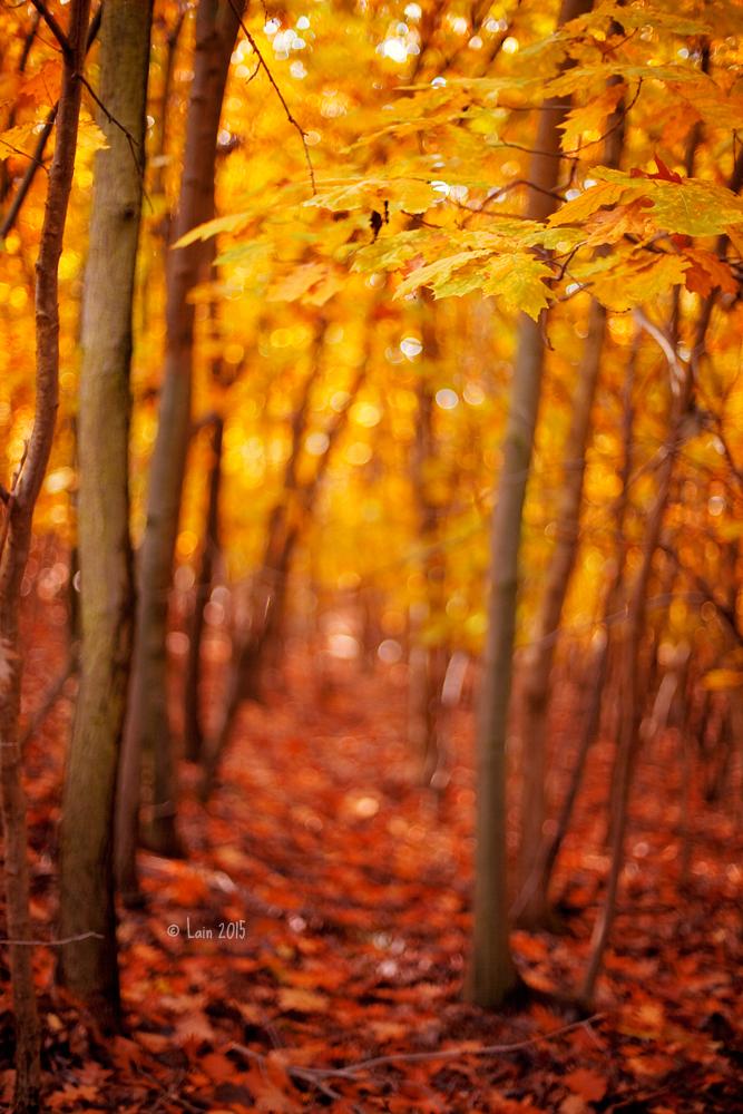 Den Wald vor lauter Herbst nicht sehen by Lain-AwakeAtNight