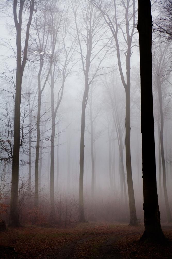 ghosttrees by Lain-AwakeAtNight